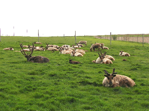 part-of-the-herd-relaxes