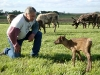 daryl-inspecting-calf