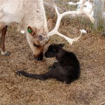 1st bull calf of 07 calf crop