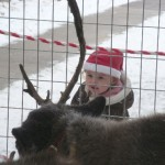 Very small child looking at deer from pen view pt