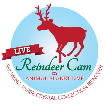 Reindeer Cam on Animal Planet Live